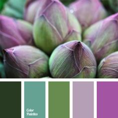 color of a bog, color of an asparagus, color of green leaves, color of greens, color of marsh greens, color solution, green, lilac, lime, marsh color, shades of violet, violet and green.