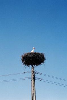Polish storcks - Bocianie gniazdo - bociany w Polsce
