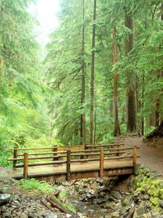 Trail Bridge, Upper Sol Duc Valley, Olympic National Park, Washington, USA Photographic Print - All For Garden Sta Rita, Sloped Garden, Bridge Design, Wood Bridge, Steel Bridge, Outdoor Projects, Backyard Landscaping, Landscaping Ideas, Garden Bridge