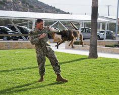 A Bad Boy On Command. Navy MWD Diego (4003x3202)