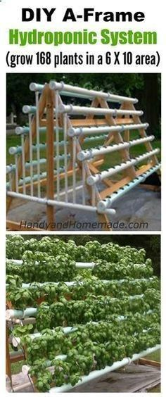 Aquaponics System - DIY Vertical A-Frame Hydroponic System, How To Grow 168 Plants In A 6 X 10 Area | Handy Homemade Break-Through Organic Gardening Secret Grows You Up To 10 Times The Plants, In Half The Time, With Healthier Plants, While the Fish Do All the Work... And Yet... Your Plants Grow Abundantly, Taste Amazing, and Are Extremely Healthy #hydroponicgardenhowto