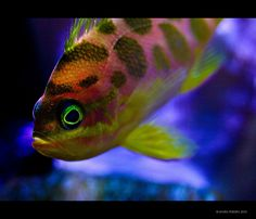 Tropical Fish | Flickr - Photo Sharing!