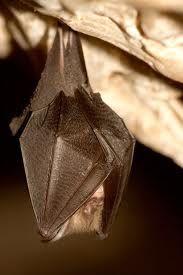 I love bats. They do good work.