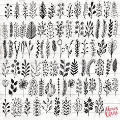 Blatt botanischen Clipart - 84 Hand gezeichnet Blatt Zweige Clipart - Blatt Logo Kunst - botanische Logo-Elemente - Botanische Illustration - for this post.Get some adorable hand drawn botanical leaf branches clipar# # Doodle Drawings, Doodle Art, Doodle Frames, Illustration Botanique, Leaf Logo, Flower Doodles, Hand Illustration, Vintage Illustration, Website Illustration