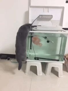 Fish attack cat - GIFspace