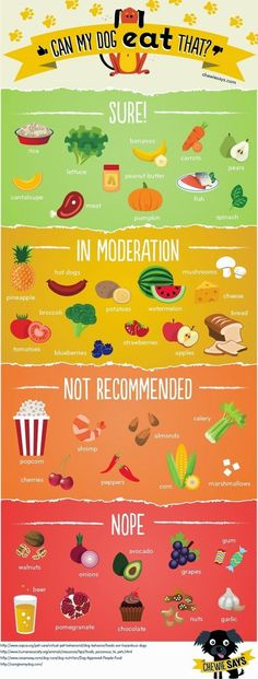 Can my dog eat that? This infographic answers once and for all! | Little Holly's Big World | Bloglovin