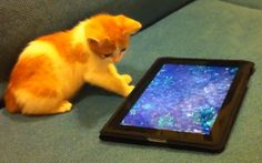 How to Make a Great Book Trailer - Part 1 of 4. Cat watching a great book trailer. http://www.writersfunzone.com/blog/2012/06/27/how-to-make-a-great-book-trailer-part-1-of-4/