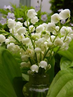 ~.        Nothing more glorious in the spring than the scent of fresh lily of the valley