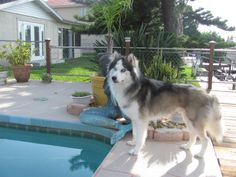 twitpic.com/e5atw2 Saving the lives of unwanted and abused #Siberian #Huskies in…