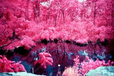 Connecticut shot on expired film that turns green foliage pink [19501300] OC #reddit
