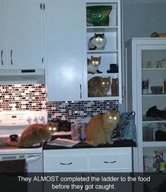 Night of the Glowing Kitties. LOL.  The food thieves. ..