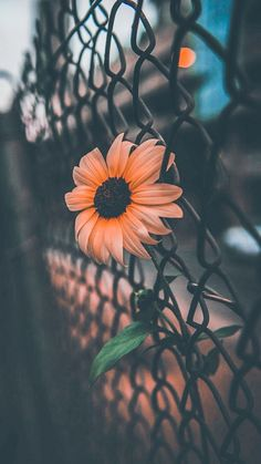 Lock Screen Wallpaper Iphone Sunflower Ideas For 2019 Cute Wallpaper Backgrounds, Tumblr Wallpaper, Pretty Wallpapers, Nature Wallpaper, Screen Wallpaper, Mobile Wallpaper, Wallpaper Desktop, Girl Wallpaper, Cartoon Wallpaper