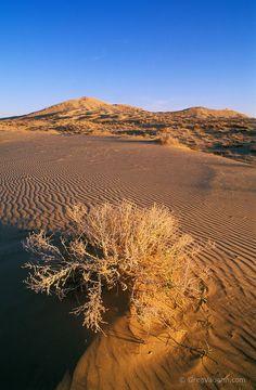 Kelso Dunes at sunrise, Mojave National Preserve, California.