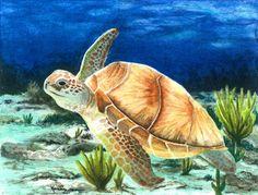 Giclee Archival Print of Original Watercolor Painting 5.25x7.25 Cruising Sea Turtle Swimming Under Water Beach Coastal Blue Aqua Brown