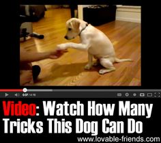 """Cute AND smart: This dog can do an astonishing number of tricks including """"moonwalk"""", rollover... and not eating the treat on his paw until allowed to do so!"""