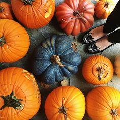 Pumpkins and cat flats
