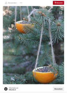 fantastic DIY bird feeder ideas that bring life to your garden . fantastic DIY bird feeder ideas that bring life to your garden . Homemade Bird Feeders, Diy Bird Feeder, Bird Suet, Unique Bird Feeders, Best Bird Feeders, Recycled Crafts Kids, Christmas Crafts For Adults, Orange Bird, Bird Houses Diy