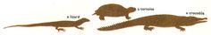 Various reptilian body forms