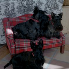 Scotty dogs on a tartan couch....precious......