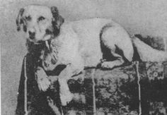 Abraham Lincoln's beloved mutt Fido - the first Presidential dog to be photographed, and the reason Fido became such a popular dog's name.