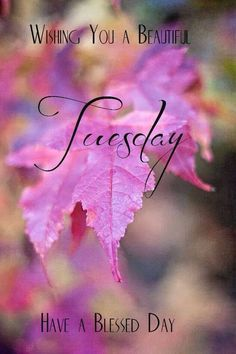 Image result for Terrific tuesday with autumn leaves