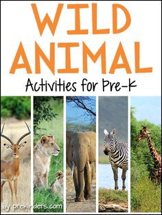 Pre-K & Preschool theme ideas for learning about African animals. Find more Wild AnimalActivities for Pre-K on thecategory page. Books Check here for a complete list of Safari Animal Books! Elephant Conga Line {Large Motor} Children walk like an elephant on all four legs, trying to keep their balance while lifting a front leg and a back leg. We made a line of elephants and tried walking around the circle