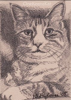 ACEO Tabby Cat Kitty Original Graphite Pencil by OneKeeneKat, $9.99
