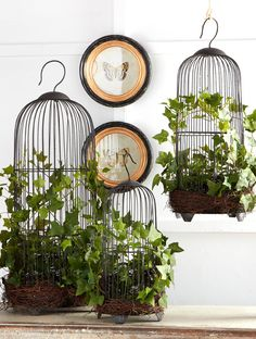 Curly Ivy Bird Cage, The bird cage is equally a home for your birds and a decorative tool. You are able to choose what you may want one of the bird cage versions and get a whole lot more particular images. Vintage Birds, Vintage Decor, Bird Cage Design, Mein Café, Hanging Bird Cage, Antique Bird Cages, Geometric Bird, Fairy Garden Houses, Interior Plants