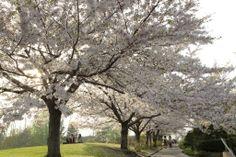 Temiya Park in Otaru