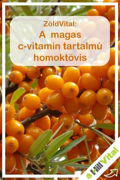 Ez a sárgás gyümölcsű növény kedvező élettani hatással rendelkezik, amit sokoldalúan fel tudunk használni. Akár  gyümölcslé, gyümölcsleves, szörp, tea , lekvár, zselé formájában is fogyaszthatunk.   C-vitamin tartalma, sokkal magasabb az átalunk is ismert c-vitamin tartalmú növényekben, például a citromtól 10-szer több c-vitamint tartalmaz. A homoktövis jelentős B-vitamin komplex, cink-, vas-, magnézium és kálium forrás, emellett tartalmaz E- vitamint és béta- karotint. Vegetables, Healthy, Food, Essen, Vegetable Recipes, Meals, Health, Yemek, Veggies