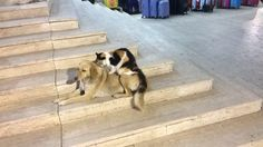 This cat was giving this dog a back massage