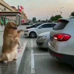 Adorable Cute Animals, Cute Little Animals, Animals Beautiful, Cute Dogs, Rare Animals, Animals And Pets, Cute Dog Wallpaper, Akita Dog, Fluffy Dogs