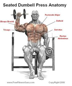 Seated Dumbbell Press Anatomy - Healthy Fitness Shouder Workout - Yeah We Workout ! Sixpack Workout, Dumbbell Workout, Kettlebell, Gym Workout Tips, Fun Workouts, At Home Workouts, Workout Fitness, Fitness Bodybuilding, Academia Fitness