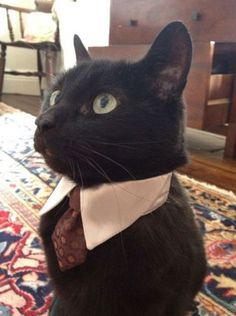 Cute! Remember to dress classy for those vac scheme interviews!