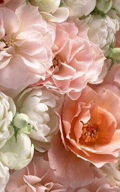 "syflove: ""roses """