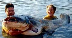 Now, that is a catfish!