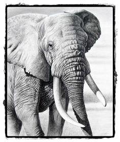 25 belos desenhos de animais para a sua inspiração 17