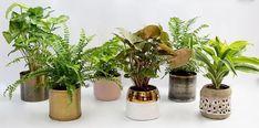 The Potting Garden Flower Bar, Plant Box, Mini Plants, Security Door, Wooden Boxes, Concrete, The Neighbourhood, Planter Pots, Porcelain