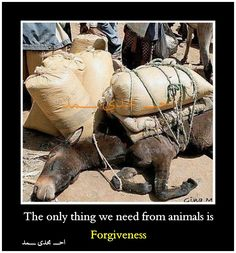 The only thing we need from animals if forgiveness *~❤•❦•:*´`*:•❦•❤~*