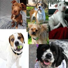 Dogs for adoption or sale in Wisconsin http://www.doggielife.com/dogs?rids=50&p=1