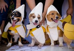 Banana doggies!!