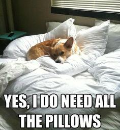 Mine does too!!!! #corgi