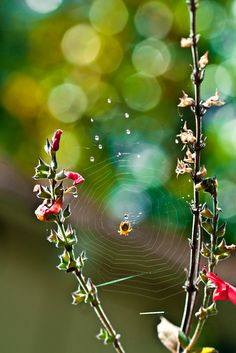 Happy Little Spider by joyegreen on 500px