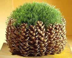 Pinecone pot