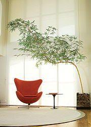 Bambu Mosso artificial R$200,00 - DTHILLBERG | TodaOferta