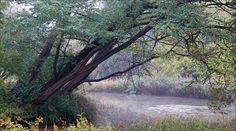 Kleiner See im Morgennebel - Jahreszeiten - Galerie - Community
