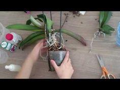 Jak przesadzić storczyki? Przesadzanie, sadzenie i pielęgnacja Phalaenopsis - NES - YouTube Orchid Care, Garden Plants, Garden Landscaping, Flower Power, Diy And Crafts, Backyard, Landscape, Flowers, Gardening