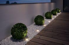 Nueva imagen para tus flores y plantas con bombillas de Led