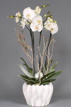 #orchid #winterestorchidsinfo