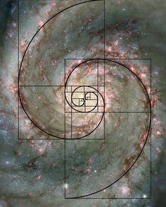 The Golden Mean - Golden Ratio - Fibonacci Fibonacci Sequence In Nature, Fibonacci Spiral In Nature, Fibonacci Spiral Tattoo, Fractals In Nature, Spirals In Nature, Fibonacci Golden Ratio, Fibonacci Number, Golden Ratio Spiral, Divine Proportion